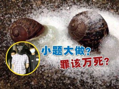 撒盐杀死蜗牛涉虐待动物!香港博士生被捕惹议