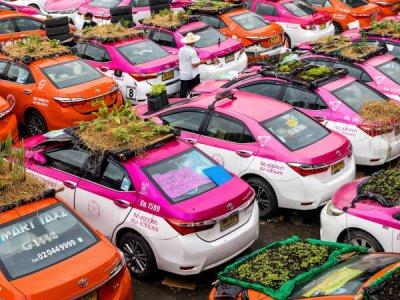 Bangkok 'taxi graveyard' comes to life with mini-gardens