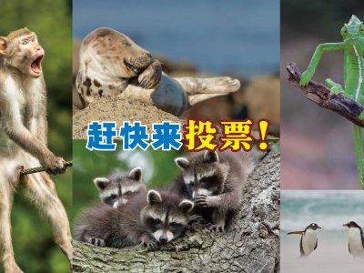超像图梗里的表情!搞笑野生动物摄影奖促进动物保育