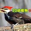 包括象牙喙啄木鸟 美国宣布23物种灭绝!