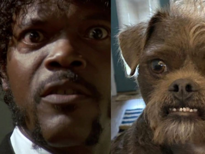Rescue dog in the US compared to actor Samuel L. Jackson