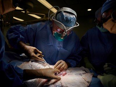 救星来了!基因改造猪肾移植人体实验成功