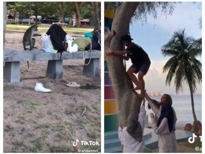 Video of monkey snatching woman's handbag, throwing money from a tree at Lumut's Teluk Batik beach tickles TikTok