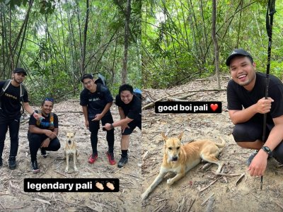 Video of 'Pali' the dog keeping a group of Malaysian hikers safe goes viral, wins hearts on social media (VIDEO)