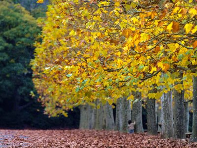 Autumn, again: A time for apple pies, cinnamon doughnuts and strong black coffee in Japan