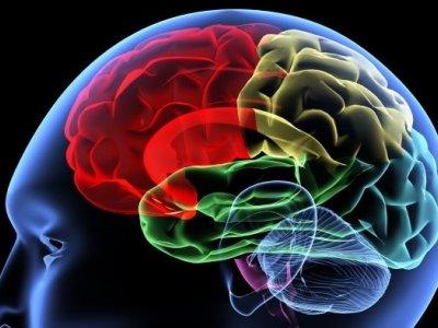 Neuroscientist: Intelligence is a mental state