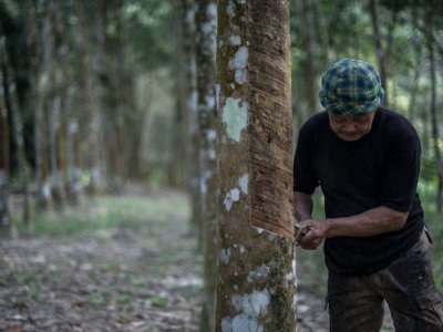 Plantation Industries Ministry asks rubber smallholders in Kedah to improve production quality, income