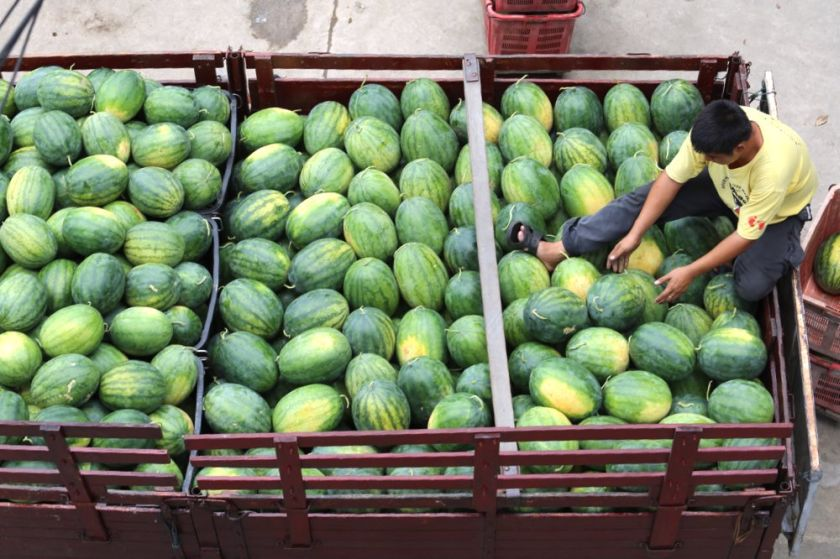 In 2020, watermelons recorded the highest exports out of Malaysia in terms of weight out of the 14 fruits studied. — Picture by Choo Choy May