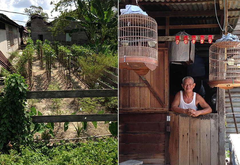 Villagers plant vegetables and fruits as a side income (left). The 63-year-old man who rears birds as a hobby (right).