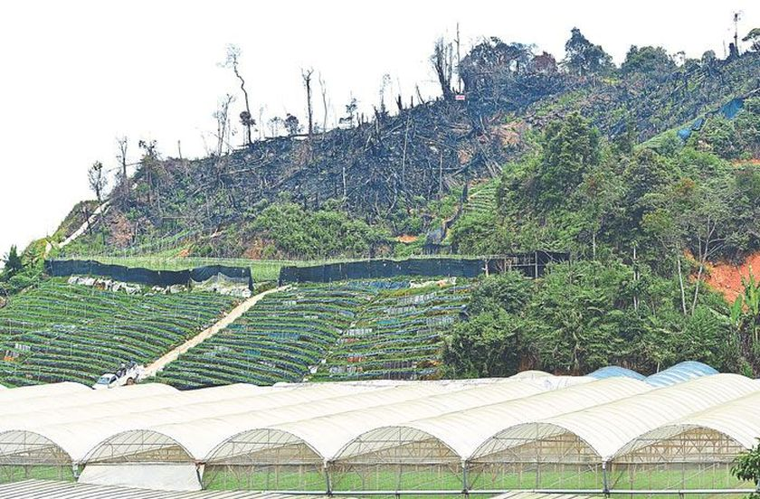 The site of illegally cleared land in Kampung Raja, Cameron Highlands. — Picture by Marcus Pheong