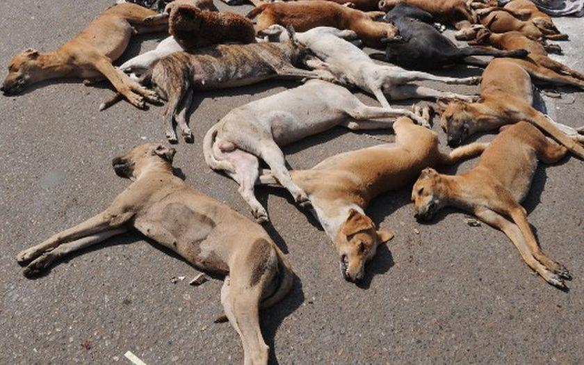 Ten dogs were found poisoned in a Bukit Bintang car park last week. — AFP pic