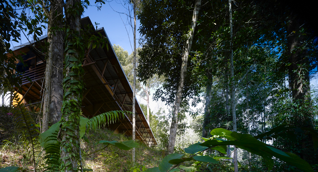 Drawing on vernacular precedents the house sits lightly among the rainforest.