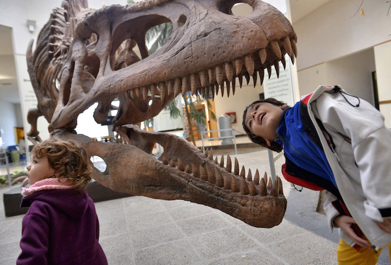 A boy looks inside the skull of a Tyrannosaurus Rex replica at the Egidio Feruglio Museum in Trelew, Argentina, in this May 18, 2014 file photo. — Reuters pic