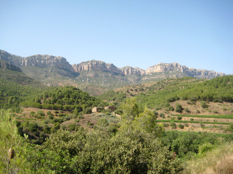 File photo of the landscapeof a Spanish vineyard in the Priorat region. — Rosemary George/Reuters pic