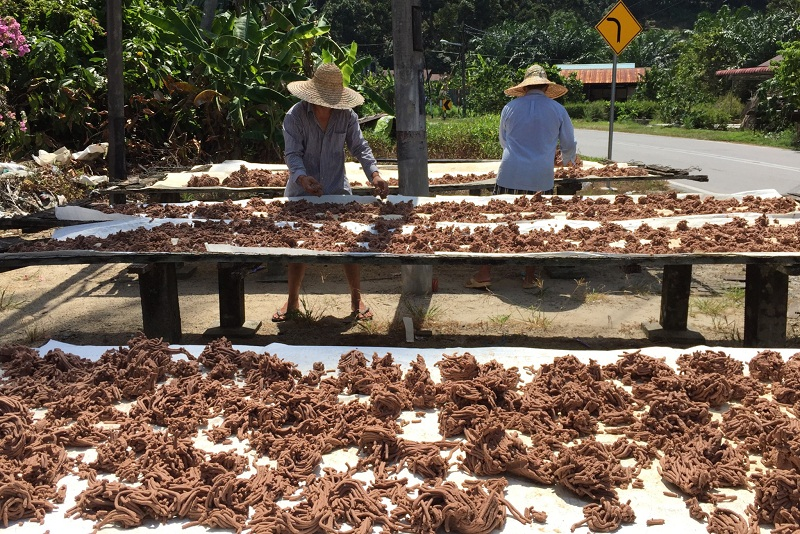 Workers drying belacan (shrimp paste) under the hot sun. — Picture by KE Ooi