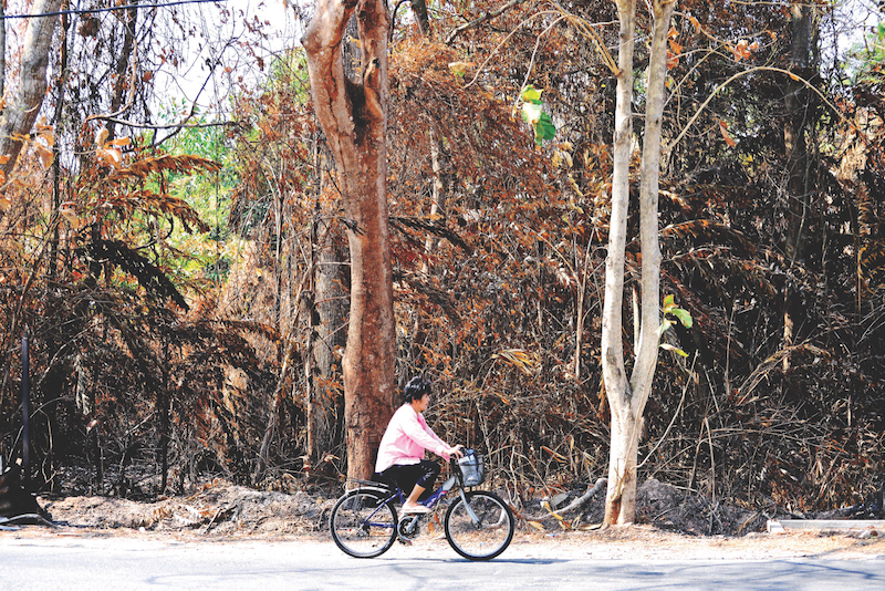 A woman cycles past a dried-up patch of forest in Chuping. — Picture by R. Mahgeshan