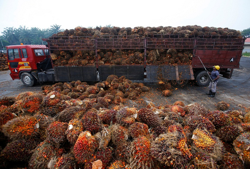 Palm oil prices have been boosted by stronger soy bean oil prices. — Reuters pic