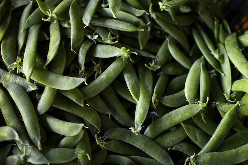Harvested 'guisante lagrima,' or 'tear pea,' still in their pods at the farm of Villasana Hernaez in Arrieta, Spain, May 24, 2016. The vegetable, also known as 'green caviar' among the country's top chefs, is so prized that the shelled peas sell for roughly US$100 a pound. — Picture by Samuel Aranda/The New York Times