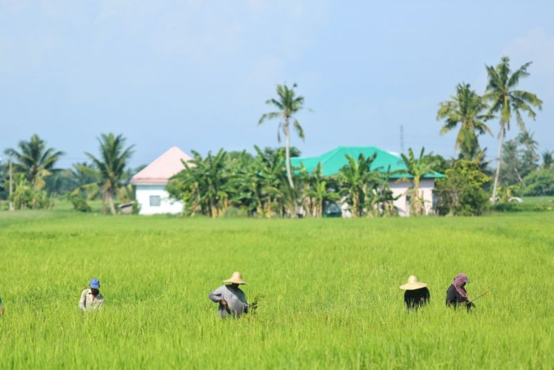 The Agriculture and Food Industries Ministry, in a statement today, said the plan focused on all four dimensions of food security in line with the Food and Agriculture Organisation (FAO), namely, availability, access, consumption as well as stability and sustainability. ― Picture by Saw Siow Feng