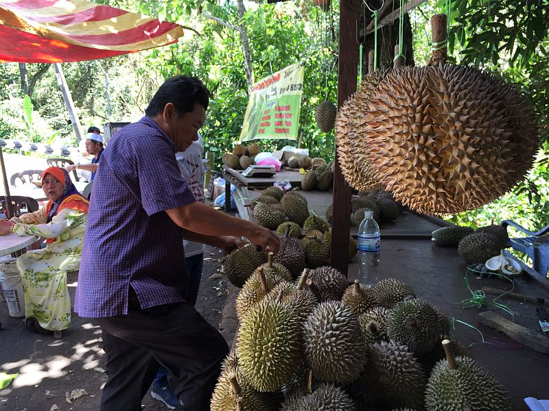 The trade in durians has exploded over the past decade, largely driven by China's growing appetite, with prices of the once cheap fruit selling for RM60 or more a kilo. — Picture by KE Ooi