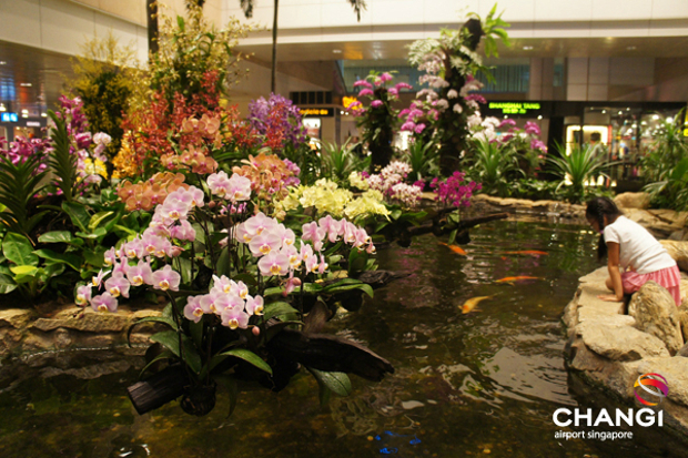 The orchid garden at Changi Airport. — Picture by Changi Airport via AFP