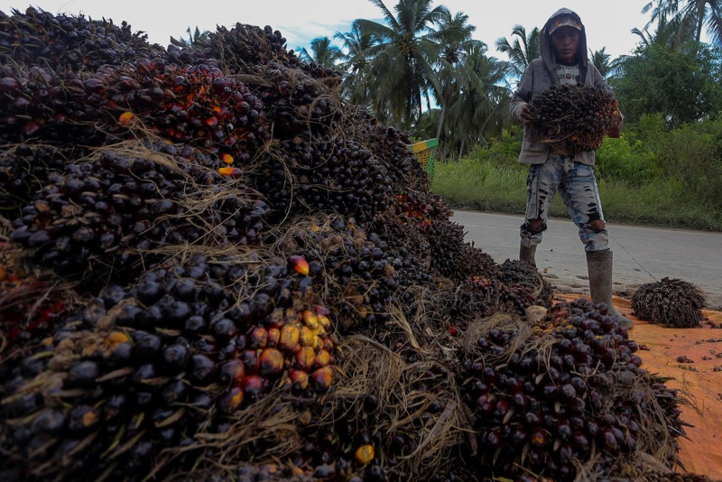 NASH deputy president Adzmi Hassan labelled US' decision to ban palm oil products produced by FGV as a 'reckless act' as it will adversely affect Felda settlers' livelihoods. — Reuters pic