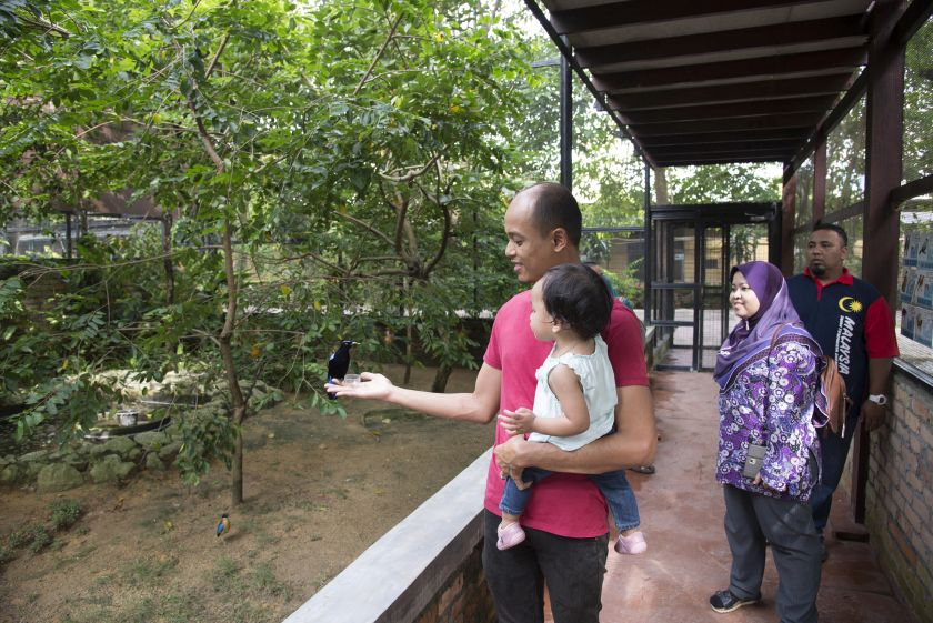 The Penang Bird Park has three aviaries where visitors can feed the birds. — Picture by K.E.Ooi
