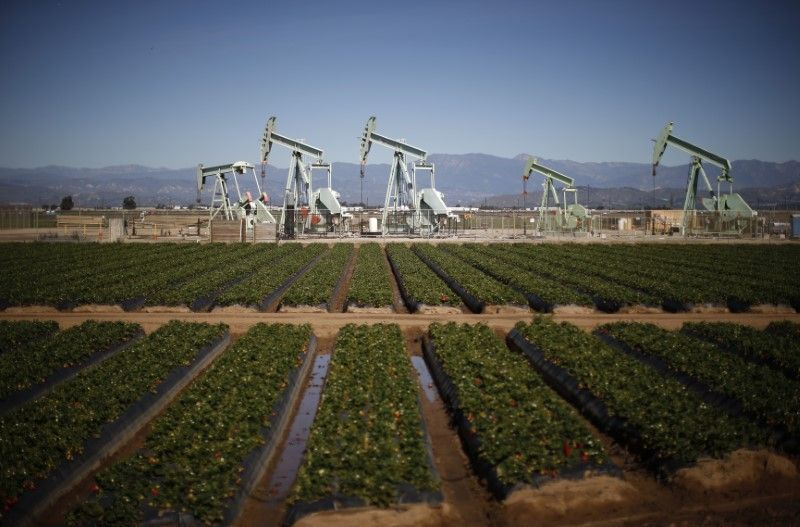 Oil pump jacks are seen next to a strawberry field in Oxnard, California February 24, 2015. — Reuters pic