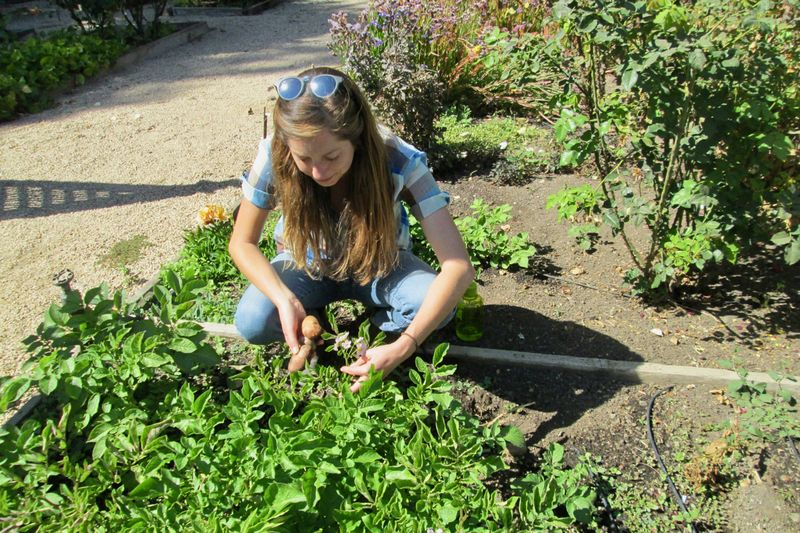 Gardening could help improve body image, according to new research. — Mira Honeycutt/DailyZester/Reuters pic