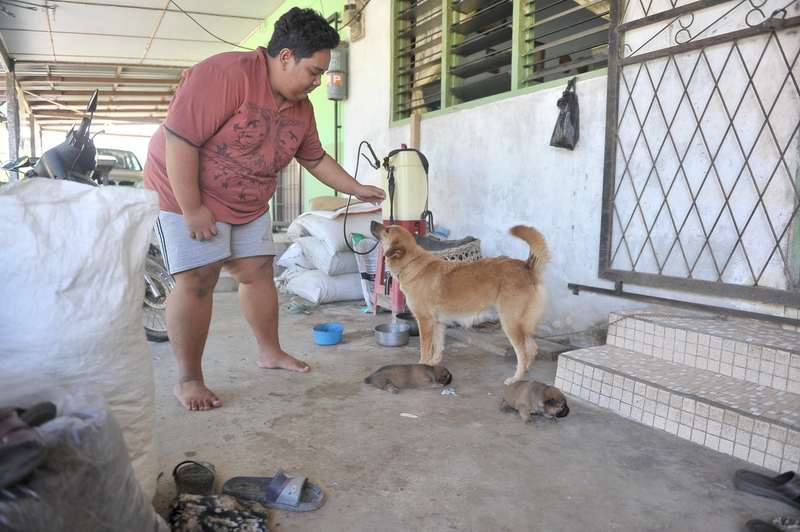 Datuk Amar Douglas Uggah Embas urged for full cooperation of all household dog owners to have their dogs vaccinated as soon as possible. — Bernama pic