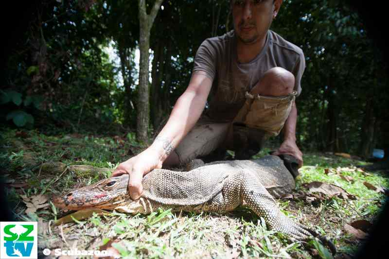 Sergio with a water monitor lizard preparing it for measurements.