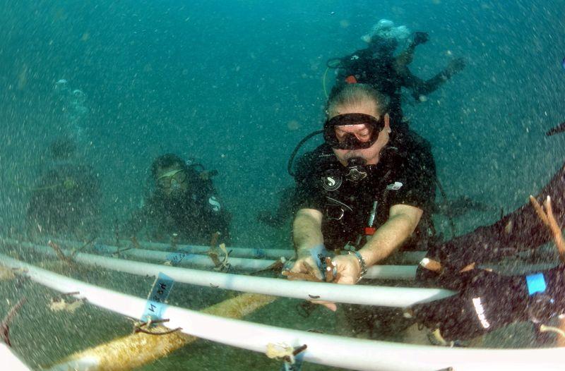 Sultan of Johor Sultan Ibrahim Sultan Iskandar planting coral seeds at a depth of 15-feet in waters off Mentinggi Island near Mersing, August 7, 2017. — Bernama pic