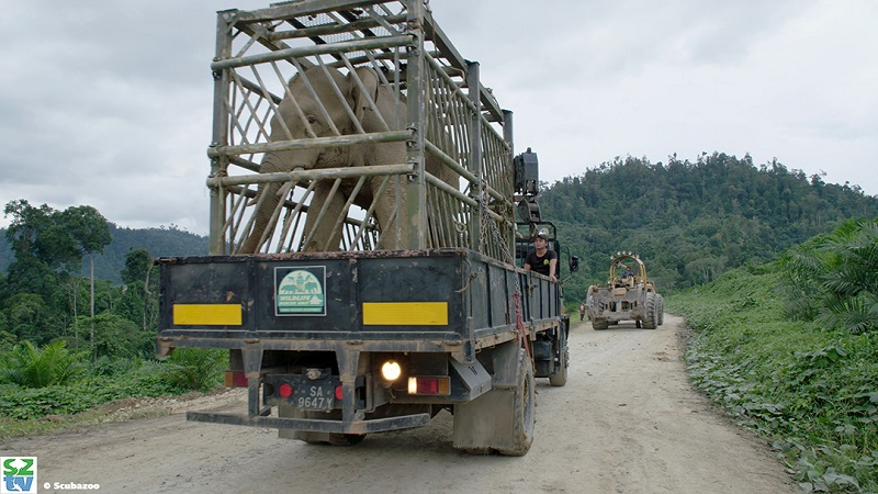 The truck carries a specially designed cage that enables the WRU to safely transport the elephant to a carefully selected nature reserve selected by the wildlife district officers.