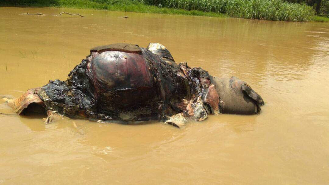 Examinations on an elephant carcass found floating in the Kinabatangan river on Monday showed cleanly cut off tusks, hind leg and skin. — Pix courtesy of Sabah Wildlife Department