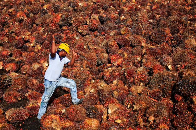 According to the Malaysia Palm Oil Board, Malaysia's overall palm oil export volume increased by 10.9 per cent to 25.7 million tonnes between January and November last year. — Reuters pic