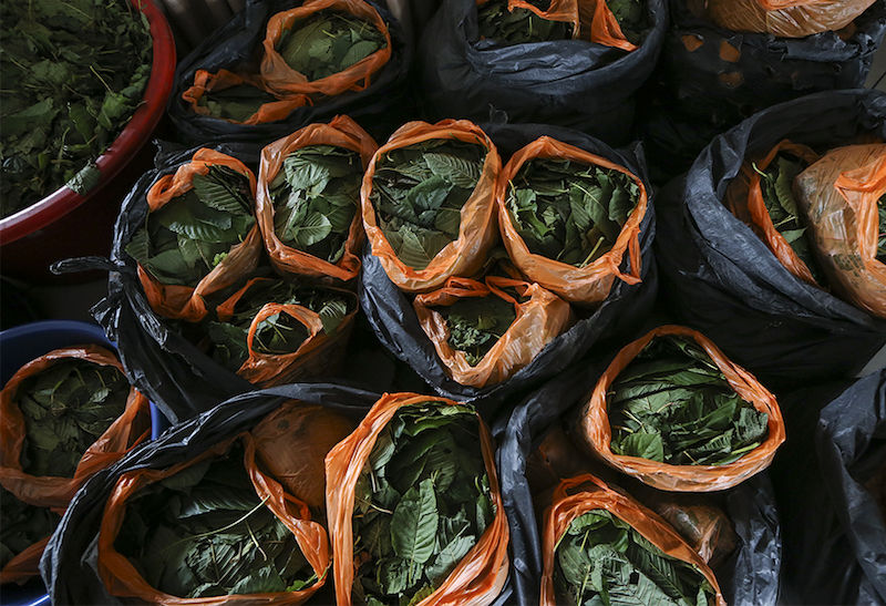 The MMEA foiled an attempt to smuggle 360 kg of ketum leaves in Kuala Perlis. — Picture by Azneal Ishak