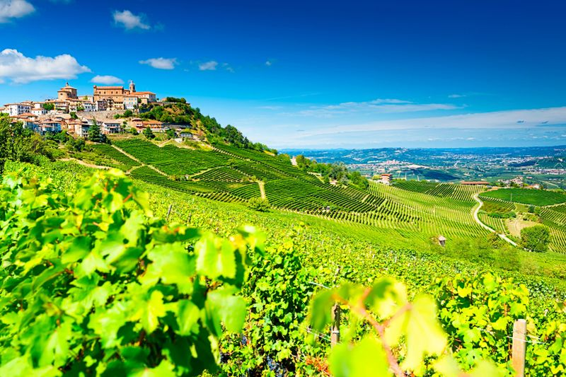 A picture of the Vineyards of Piedmont. ― AFP pic
