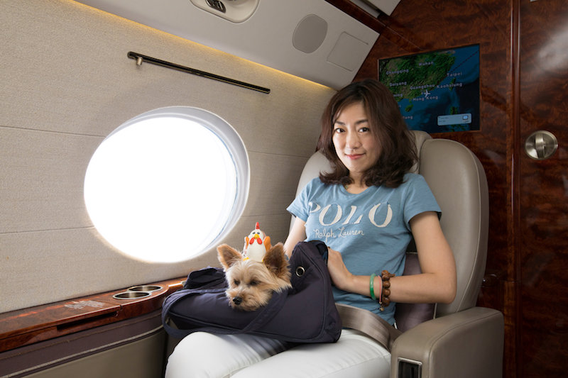 Zoe Man poses with one of her pet dogs on board a private jet during her Japan trip from Hong Kong July 17, 2017. — Reuters pic