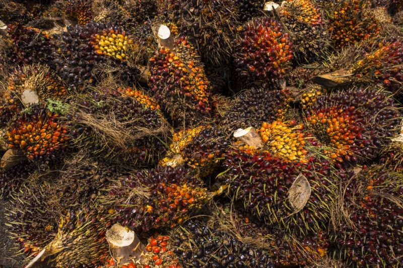 Malaysia's share in India's import of 741,490 tonnes of palm oil last month was 110,562 tonnes including 5,020 tonnes of refined oil and 3,000 tonnes of crude palm kernel oil. — Picture by Mukhriz Hazim