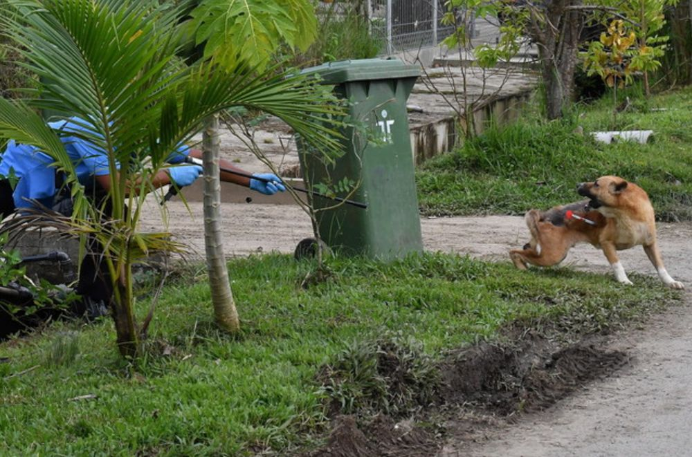 Deputy Chief Minister Datuk Amar Douglas Uggah Embas said the National Disaster Management Agency is helping the state authorities in their fight to contain rabies, which has claimed the lives of 16 persons to date. — Bernama pic