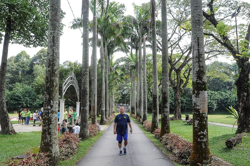 A view of Taman Rimba Kiara in Taman Tun Dr Ismail, Kuala Lumpur August 4, 2018. — Picture by Shafwan Zaidon