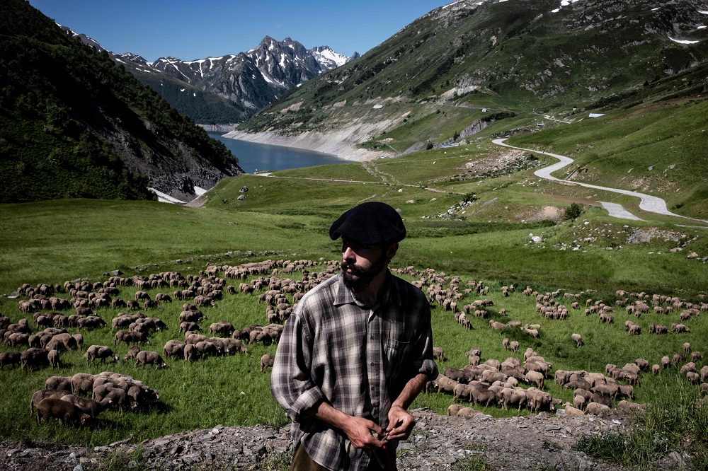 French shepherd Gaetan Meme, 24-years-old, looks over a flock of sheep, on June 21, 2018, along the Alpine pastures in the mountains near the Col du Glandon, in the French Alps. — AFP pic