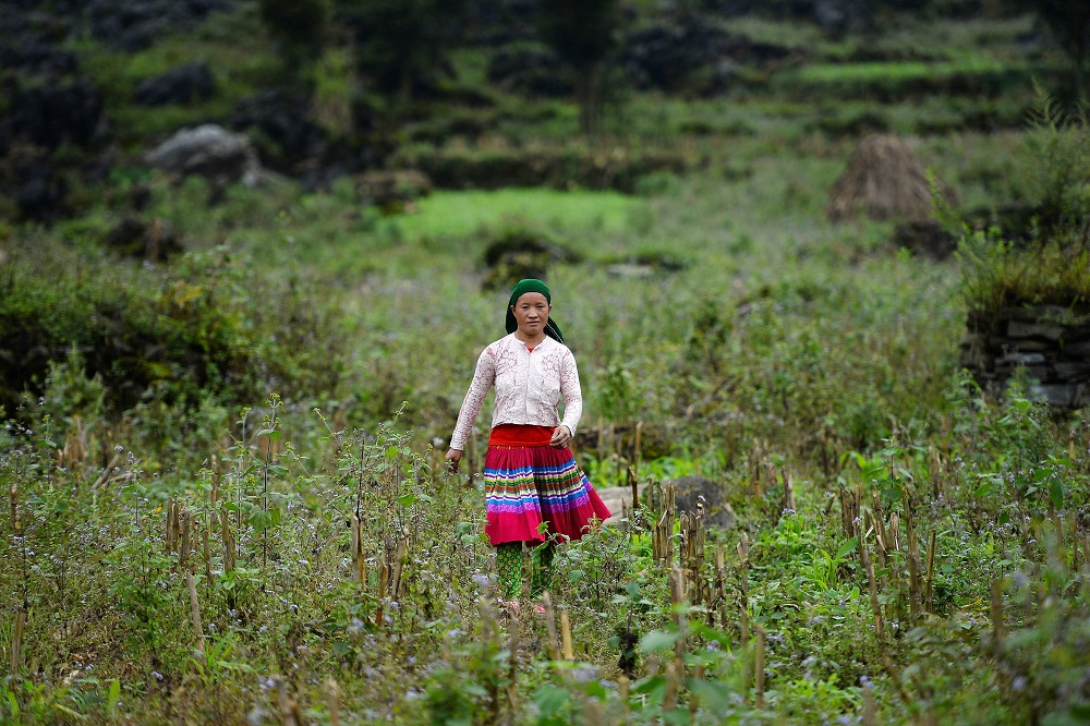 This picture taken on October 27, 2018, shows Vu Thi Dinh, a Vietnamese mother whose teenaged daughter Dua disappeared, walking in the fields near her house in Meo Vac, a mountainous border district between Vietnam's Ha Giang province and China. — AFP pic