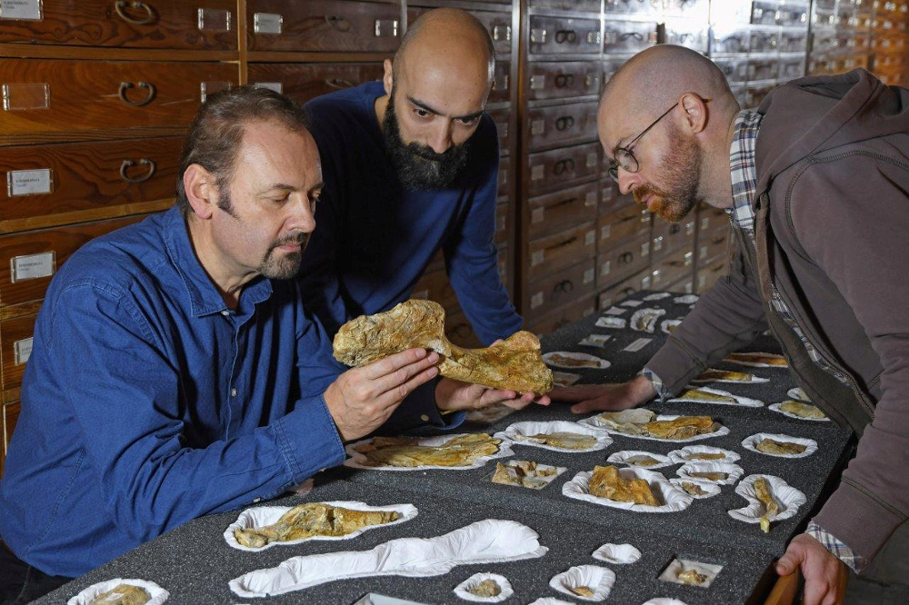 Palaeontologist Cristiano Dal Sasso (left) and co-authors Simone Maganuco and Andrea Cau (right) examine the bones of Jurassic dinosaur Saltriovenator in Milan December 18, 2018. — Picture by Gabriele Bindellini via Reuters