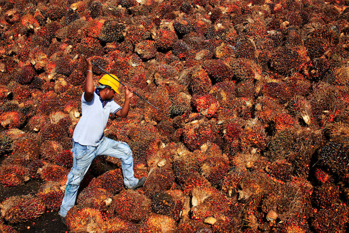 Palm oil in Malaysia is subject to mandatory certification. — Reuters pic