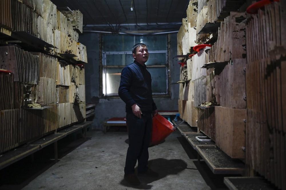 Cockroach farmer Li Bingcai tends to his roach farm in Yibin, China's southwestern Sichuan province March 25, 2019. — AFP pic