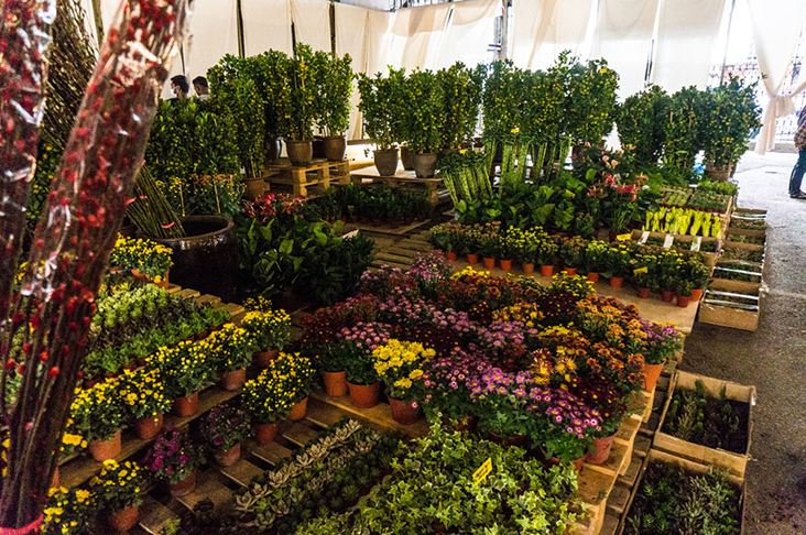 Bountiful, beautiful blooms at the pop-up flower market.