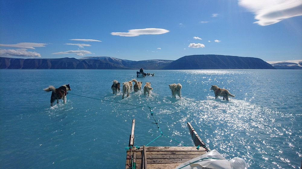 A June 13, 2019 hand out image photographed by Steffen Olsen of the Centre for Ocean and Ice at the Danish Meteorological Institute shows sled dogs wading through standing water on the sea ice during an expedition in North Western Greenland. — Steffen Olsen/Centre for Ocean and Ice at the Danish Meteorological Institute/AFP