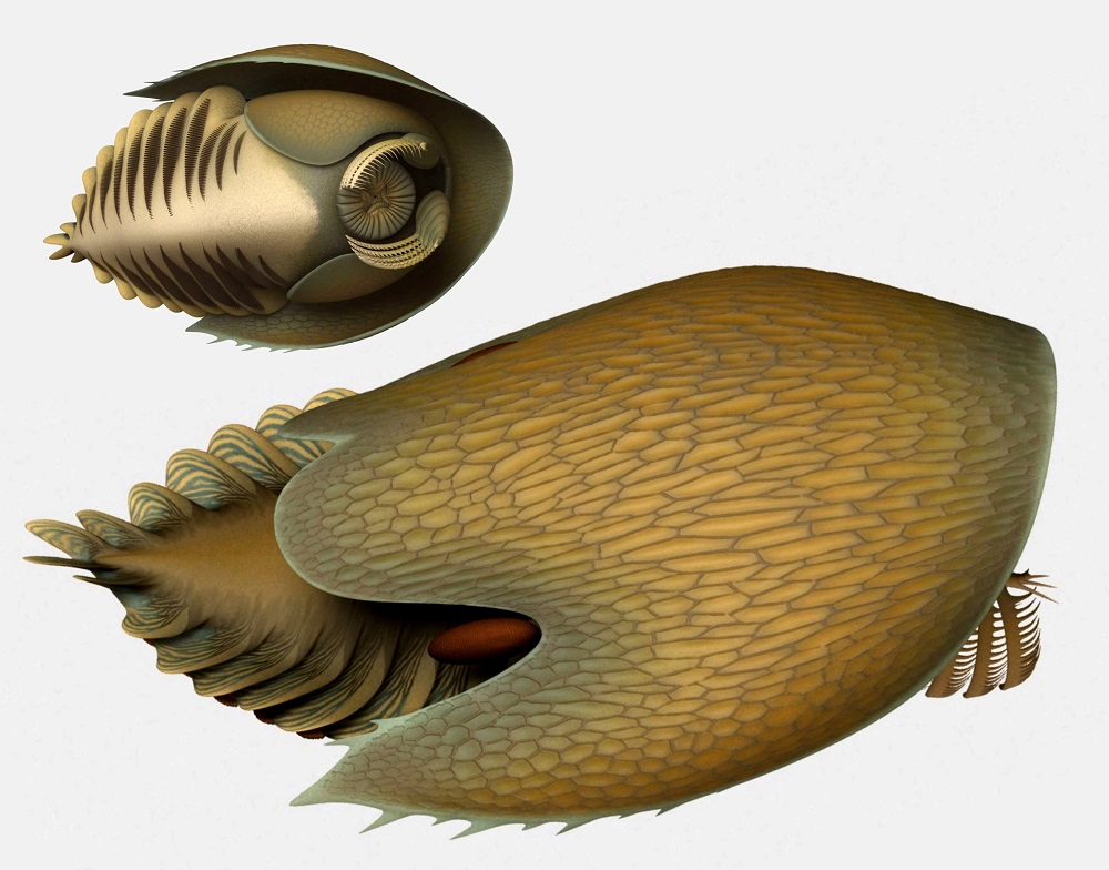 An artist's reconstruction of the marine creature Cambroraster falcatus, which lived 506 million years ago, is seen in this image released by the Royal Ontario Museum in Toronto, Ontario, Canada July 30, 2019. — Lars Fields/Royal Ontario Museum/Reuters pic