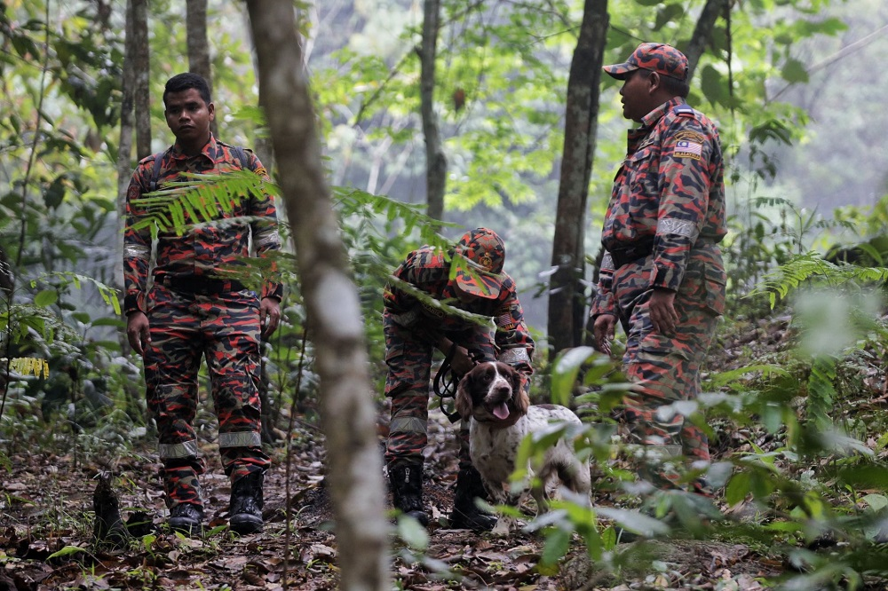 File photo showing the Fire and Rescue K9 unit in action during the search and rescue operation for missing Irish teenager Nora Anne Quoirin near The Dusun resort in Seremban August 10, 2019. — Picture by Ahmad Zamzahuri